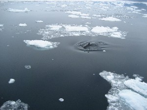 Whalesightings