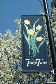 Tulip Time Banner