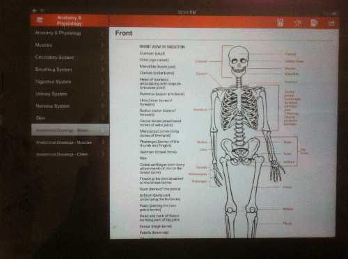Survival Skills App bones